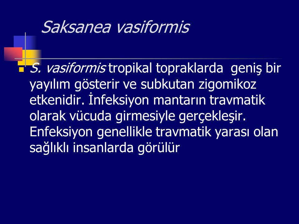Saksanea vasiformis S. vasiformis tropikal topraklarda geniş bir yayılım gösterir ve subkutan zigomikoz etkenidir. İnfeksiyon mantarın travmatik olara