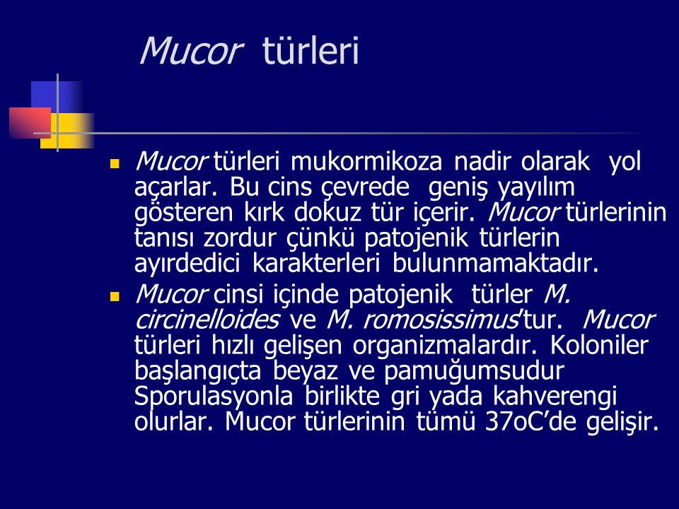 Mucor türleri Mucor türleri mukormikoza nadir olarak yol açarlar. Bu cins çevrede geniş yayılım gösteren kırk dokuz tür içerir. Mucor türlerinin tanıs