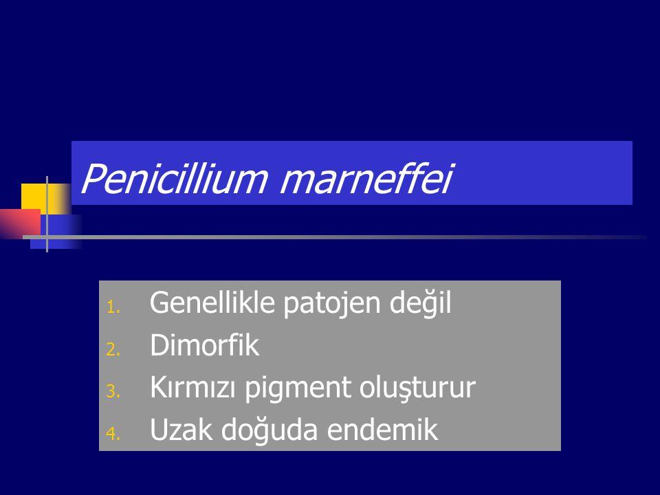 Penicillium marneffei 1. Genellikle patojen değil 2. Dimorfik 3. Kırmızı pigment oluşturur 4. Uzak doğuda endemik
