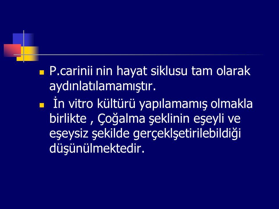 P.carinii nin hayat siklusu tam olarak aydınlatılamamıştır. İn vitro kültürü yapılamamış olmakla birlikte, Çoğalma şeklinin eşeyli ve eşeysiz şekilde