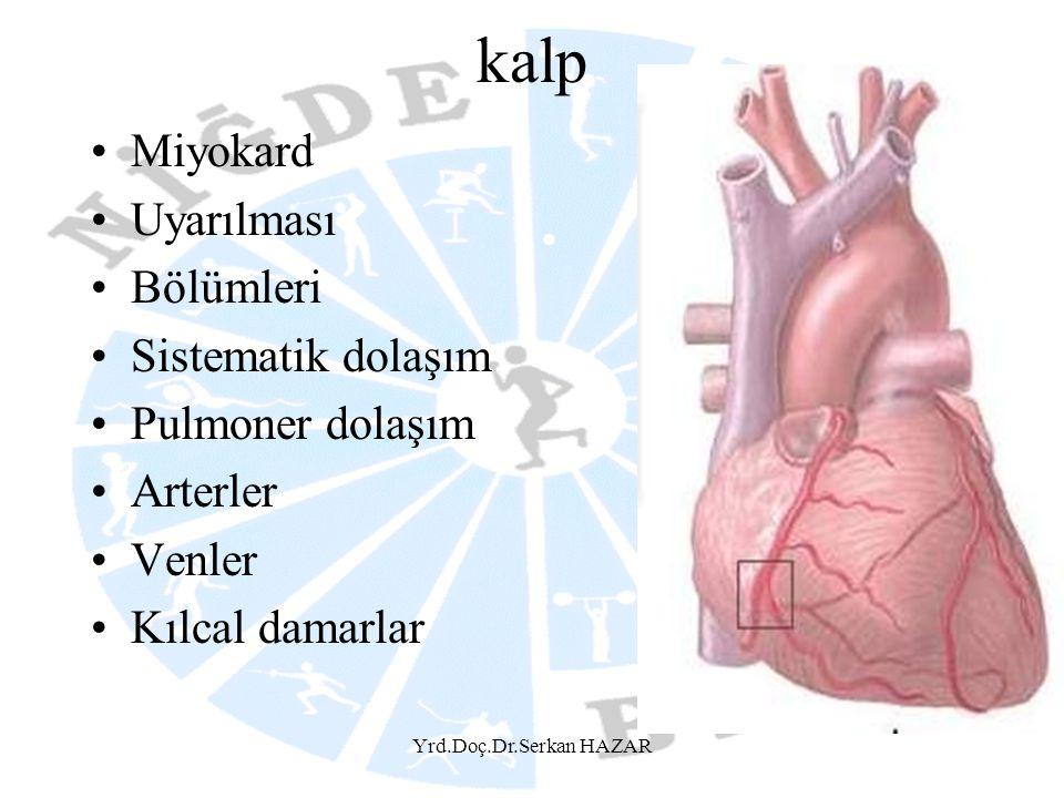 Yrd.Doç.Dr.Serkan HAZAR kalp Miyokard Uyarılması Bölümleri Sistematik dolaşım Pulmoner dolaşım Arterler Venler Kılcal damarlar
