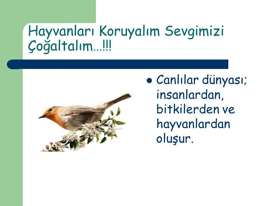 Hayvanları Koruyalım Sevgimizi Çoğaltalım…!!! Canlılar dünyası; insanlardan, bitkilerden ve hayvanlardan oluşur.
