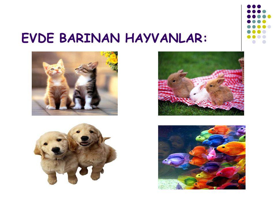 EVDE BARINAN HAYVANLAR: