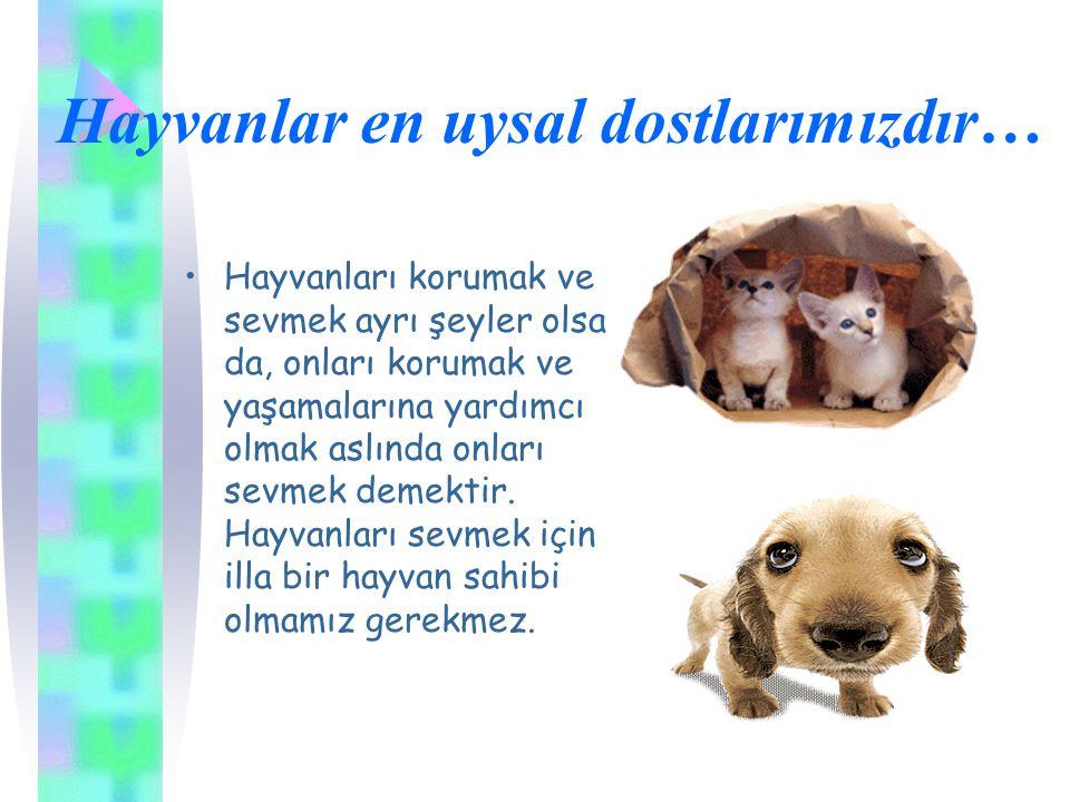 Hayvanlar en uysal dostlarımızdır… Hayvanları korumak ve sevmek ayrı şeyler olsa da, onları korumak ve yaşamalarına yardımcı olmak aslında onları sevm