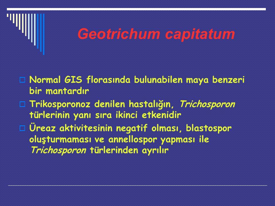 Geotrichum capitatum  Normal GIS florasında bulunabilen maya benzeri bir mantardır  Trikosporonoz denilen hastalığın, Trichosporon türlerinin yanı sıra ikinci etkenidir  Üreaz aktivitesinin negatif olması, blastospor oluşturmaması ve annellospor yapması ile Trichosporon türlerinden ayrılır