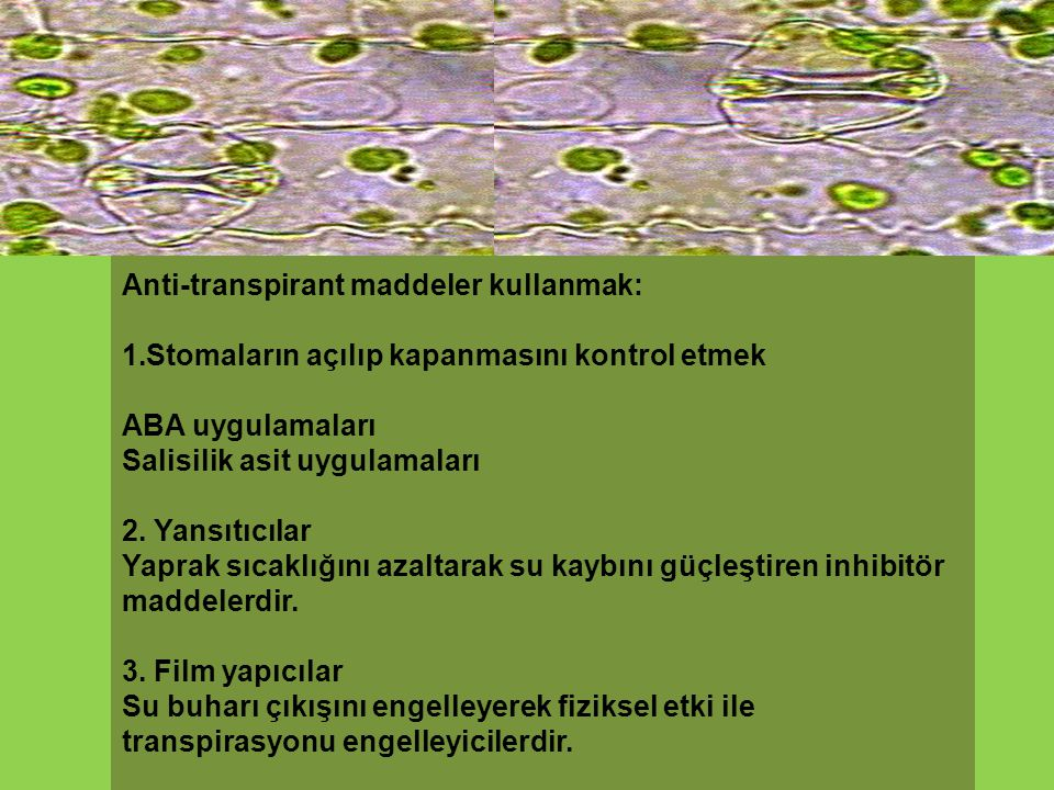 Anti-transpirant maddeler kullanmak: 1.Stomaların açılıp kapanmasını kontrol etmek ABA uygulamaları Salisilik asit uygulamaları 2. Yansıtıcılar Yaprak