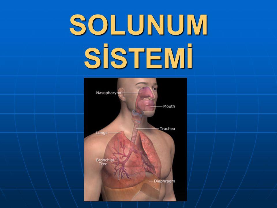 www.fendosyasi.com SOLUNUM SİSTEMİ 1.Soluk Alıp Verme Mekanizması 2.Solunum Sistemi Organları a.Burun b.Yutak d.Soluk borusu e.Akciğer f.
