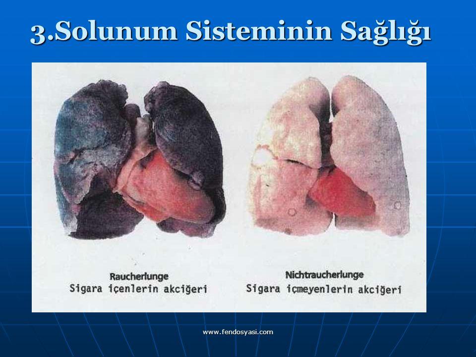 www.fendosyasi.com 3.Solunum Sisteminin Sağlığı 3.Solunum Sisteminin Sağlığı