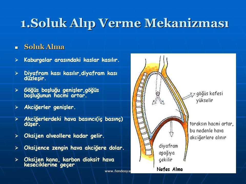 www.fendosyasi.com 1.Soluk Alıp Verme Mekanizması 1.Soluk Alıp Verme Mekanizması Soluk Alma KKaburgalar arasındaki kaslar kasılır. DDiyafram k