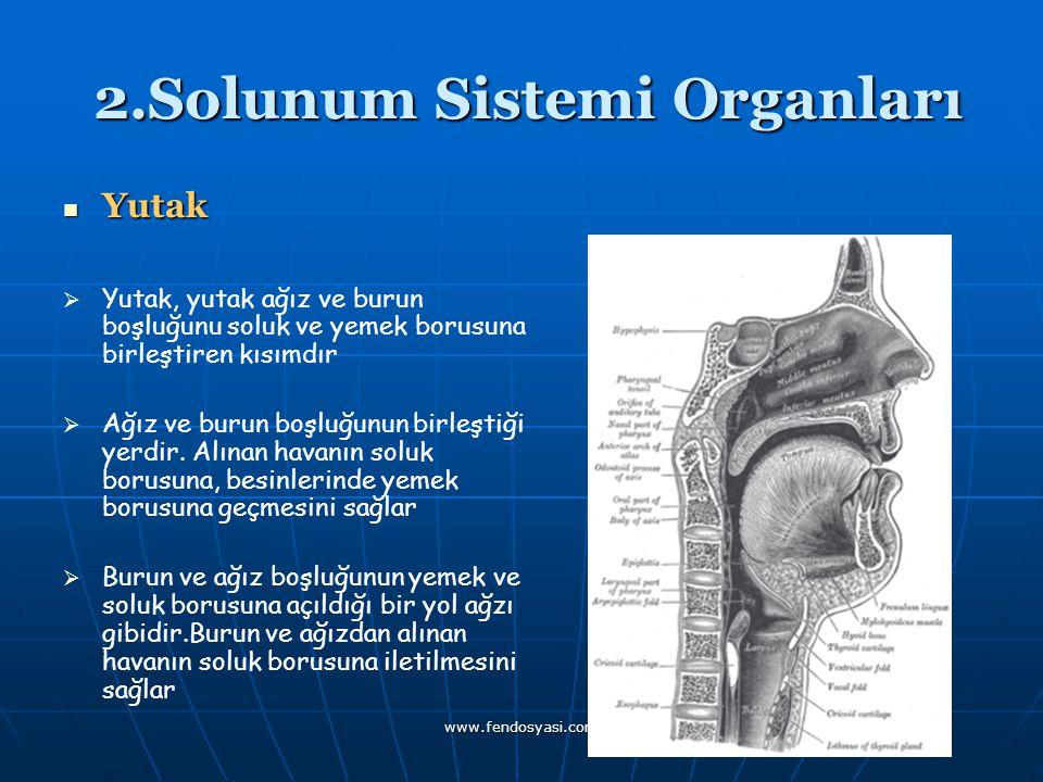 www.fendosyasi.com 2.Solunum Sistemi Organları 2.Solunum Sistemi Organları Yutak YYutak, yutak ağız ve burun boşluğunu soluk ve yemek borusuna bir