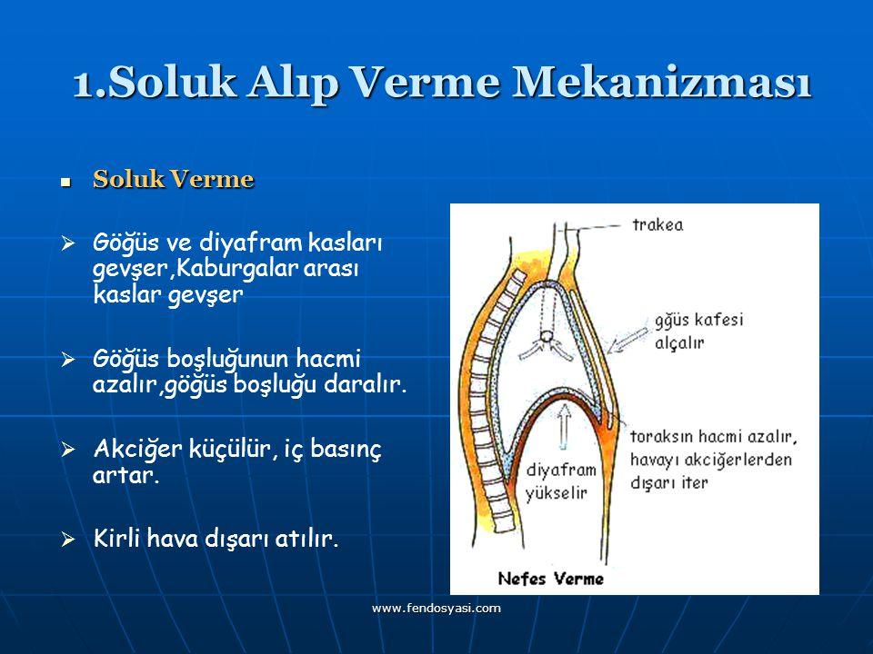 www.fendosyasi.com 1.Soluk Alıp Verme Mekanizması 1.Soluk Alıp Verme Mekanizması Soluk Verme GGöğüs ve diyafram kasları gevşer,Kaburgalar arası ka