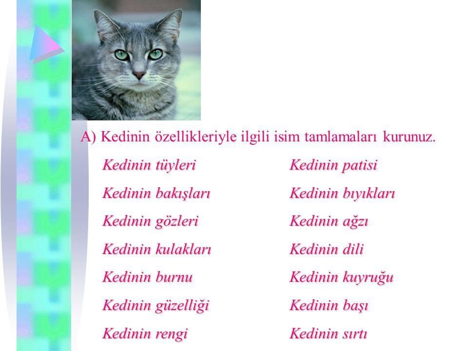 A) Kedinin özellikleriyle ilgili isim tamlamaları kurunuz.