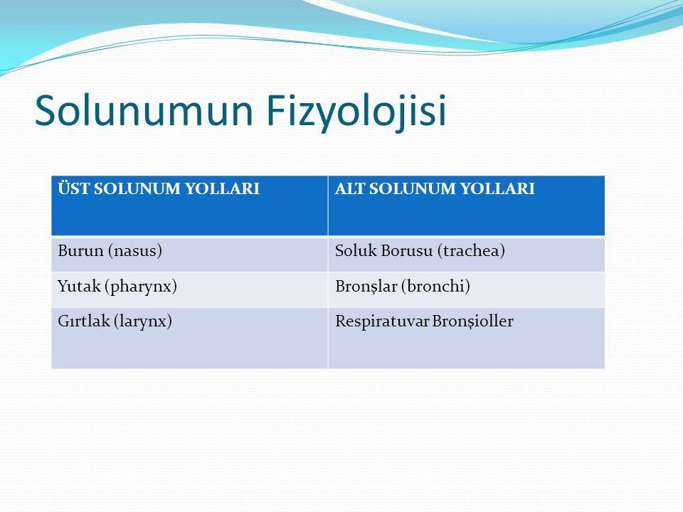 Solunumun Fizyolojisi ÜST SOLUNUM YOLLARIALT SOLUNUM YOLLARI Burun (nasus)Soluk Borusu (trachea) Yutak (pharynx)Bronşlar (bronchi) Gırtlak (larynx)Res