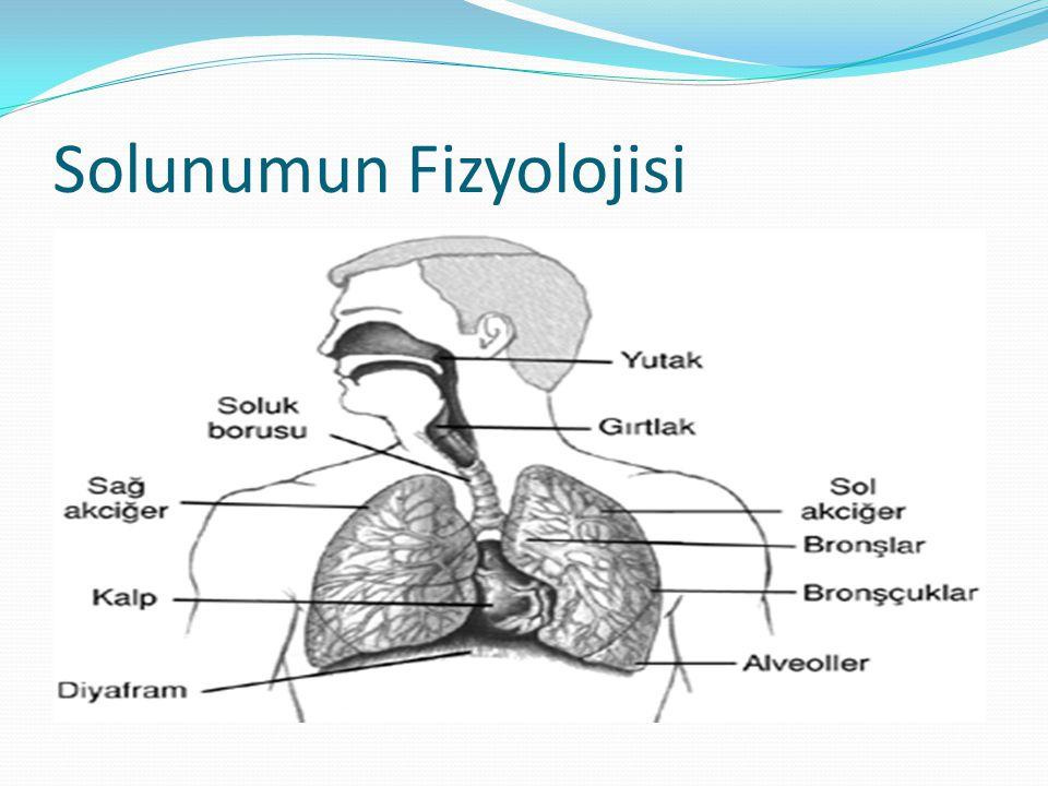 Solunumun Fizyolojisi
