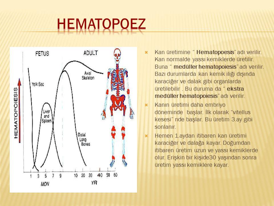 """ Kan üretimine """" Hematopoesis"""" adı verilir. Kan normalde yassı kemiklerde üretilir. Buna """" medüller hematopoiesis"""" adı verilir. Bazı durumlarda kan k"""