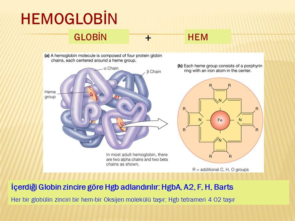 HEMOGLOBİN GLOBİN + HEM İçerdiği Globin zincire göre Hgb adlandırılır: HgbA, A2, F, H, Barts Her bir globülin zinciri bir hem-bir Oksijen molekülü taş