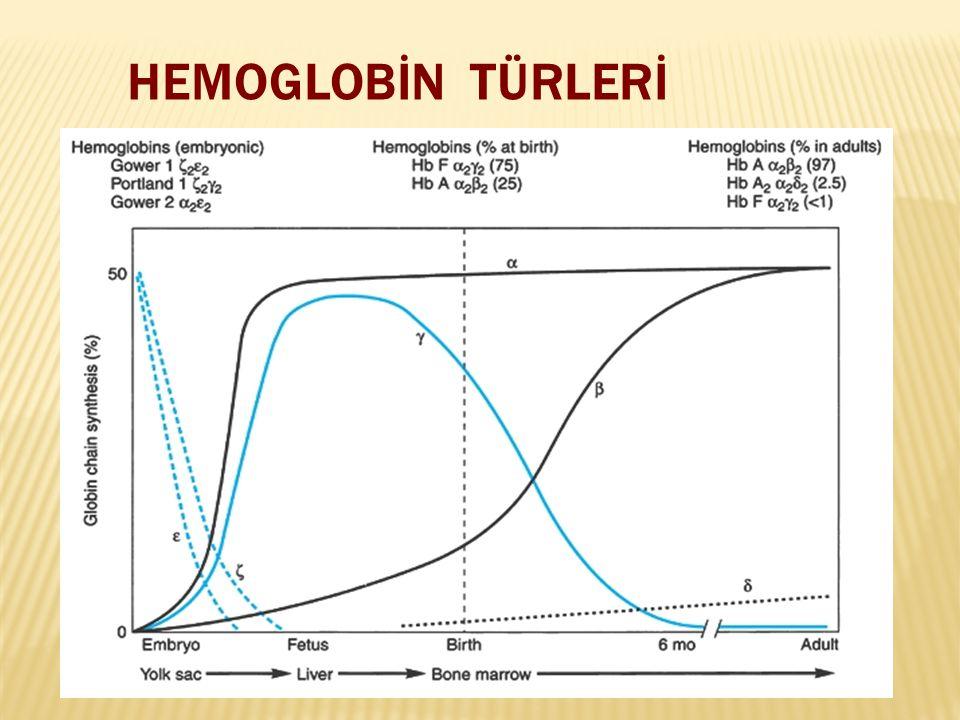 HEMOGLOBİN TÜRLERİ