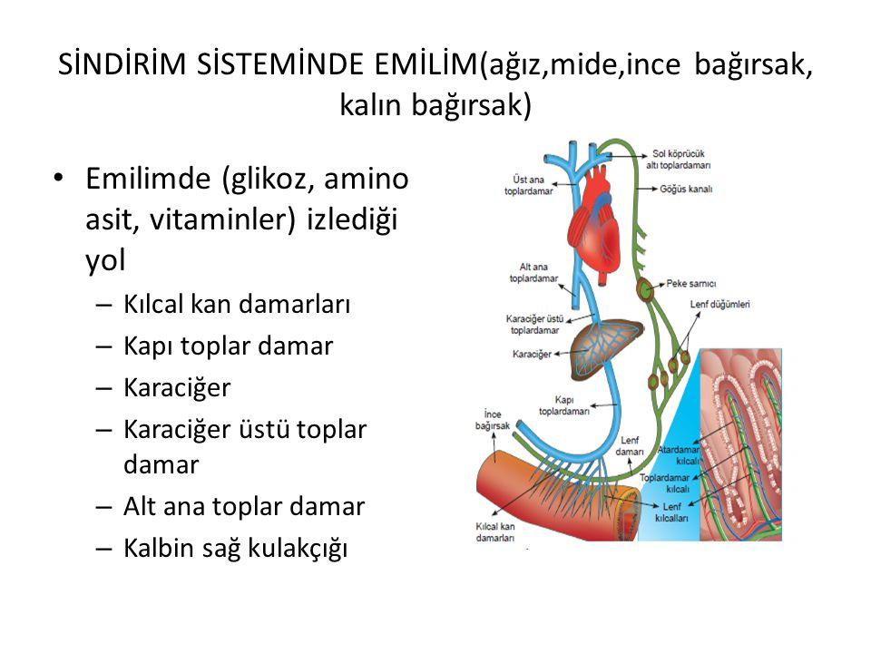 SİNDİRİM SİSTEMİNDE EMİLİM(ağız,mide,ince bağırsak, kalın bağırsak) Emilimde (glikoz, amino asit, vitaminler) izlediği yol – Kılcal kan damarları – Kapı toplar damar – Karaciğer – Karaciğer üstü toplar damar – Alt ana toplar damar – Kalbin sağ kulakçığı