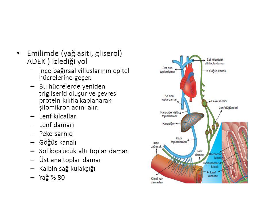 Emilimde (yağ asiti, gliserol) ADEK ) izlediği yol – İnce bağırsal villuslarının epitel hücrelerine geçer.