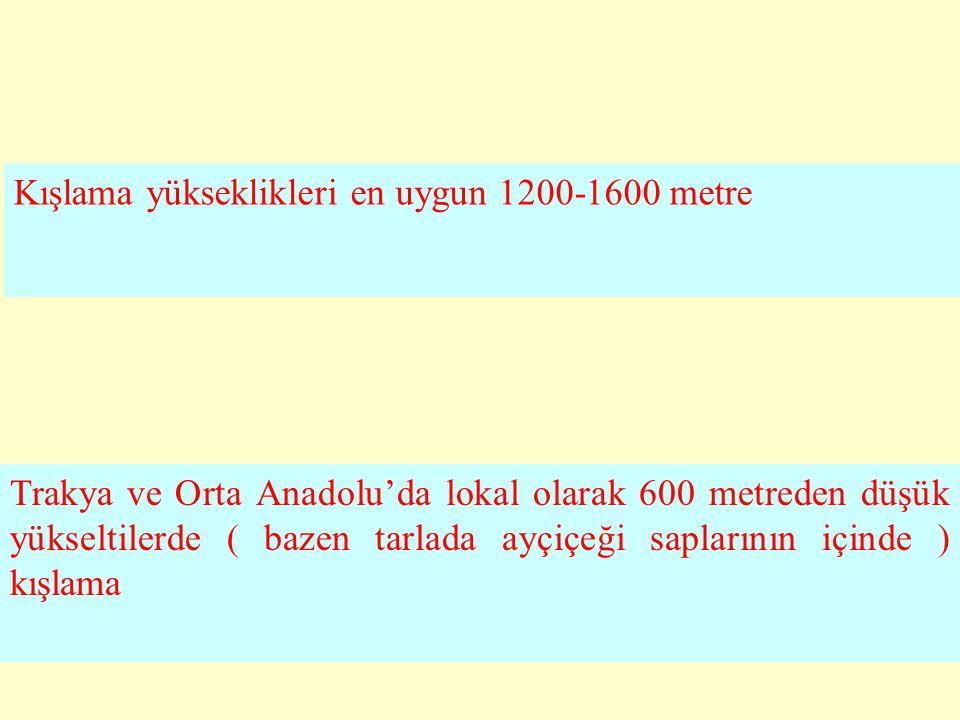 Trakya ve Orta Anadolu'da lokal olarak 600 metreden düşük yükseltilerde ( bazen tarlada ayçiçeği saplarının içinde ) kışlama Kışlama yükseklikleri en uygun 1200-1600 metre