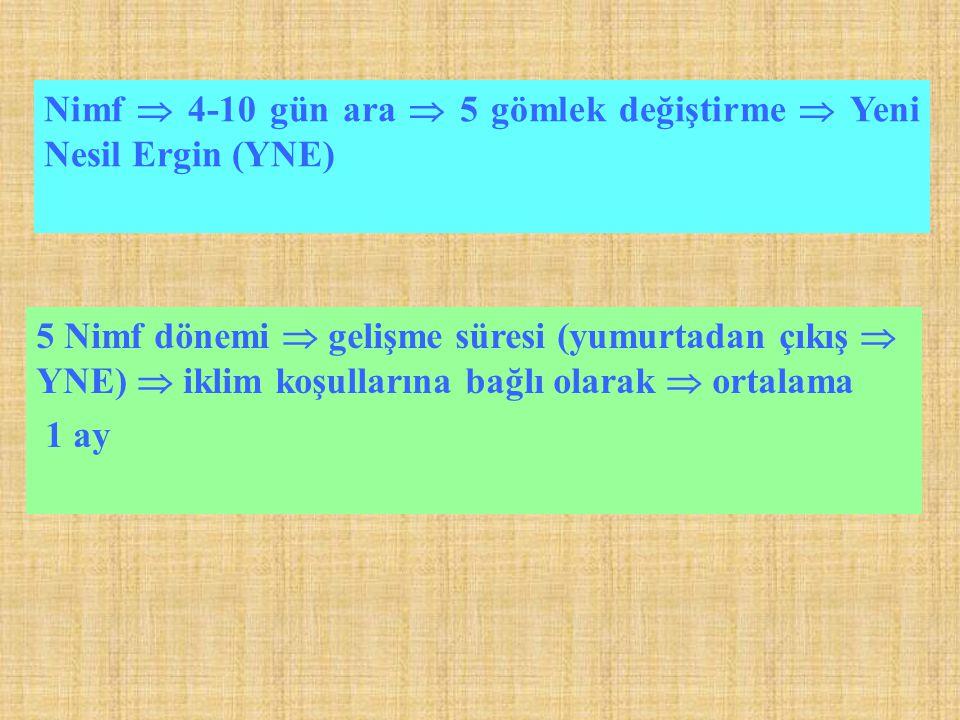 Nimf  4-10 gün ara  5 gömlek değiştirme  Yeni Nesil Ergin (YNE) 5 Nimf dönemi  gelişme süresi (yumurtadan çıkış  YNE)  iklim koşullarına bağlı olarak  ortalama 1 ay