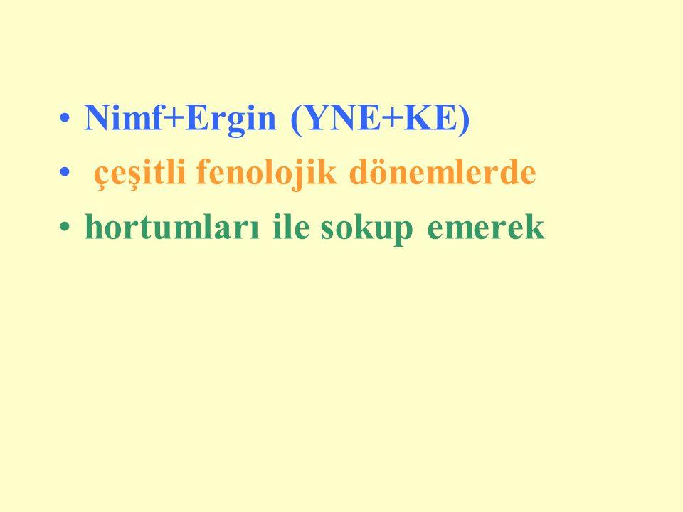 Nimf+Ergin (YNE+KE) çeşitli fenolojik dönemlerde hortumları ile sokup emerek