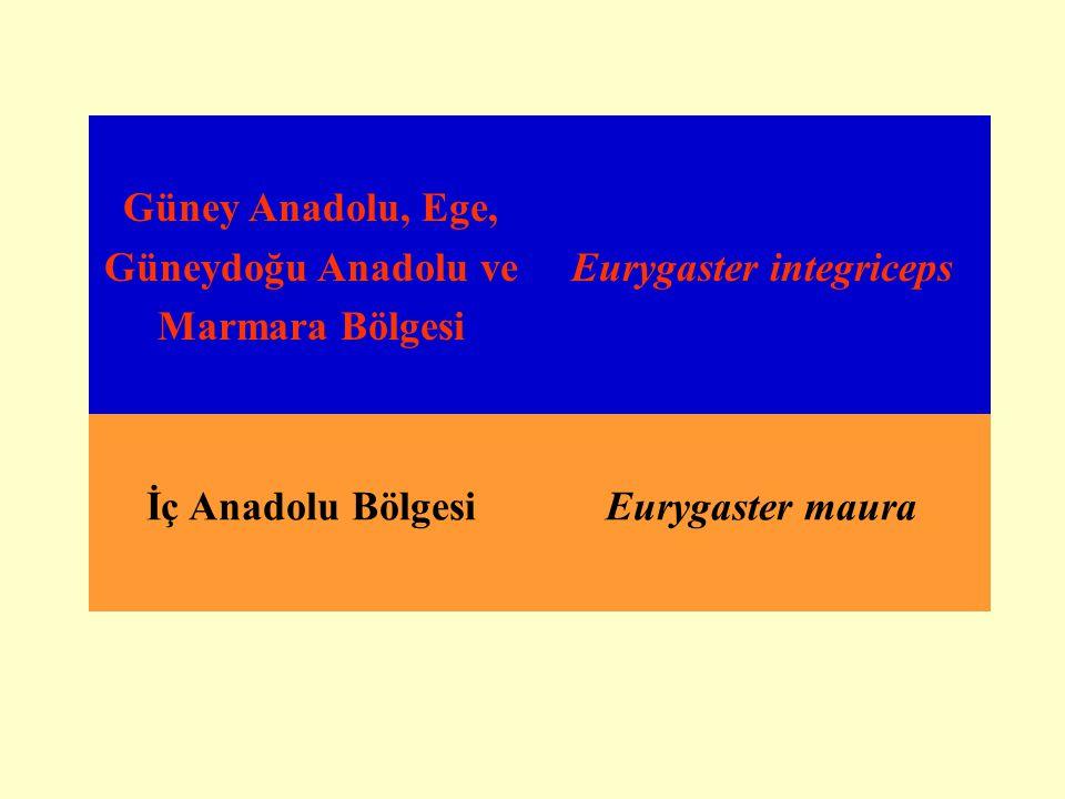 Güney Anadolu, Ege, Güneydoğu Anadolu ve Marmara Bölgesi Eurygaster integriceps İç Anadolu BölgesiEurygaster maura