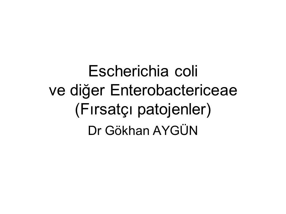 Escherichia coli ve diğer Enterobactericeae (Fırsatçı patojenler) Dr Gökhan AYGÜN