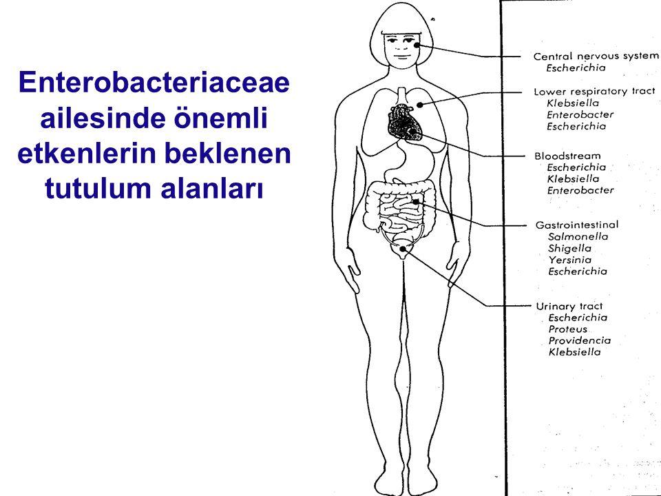 Enterobacteriaceae ailesinde önemli etkenlerin beklenen tutulum alanları