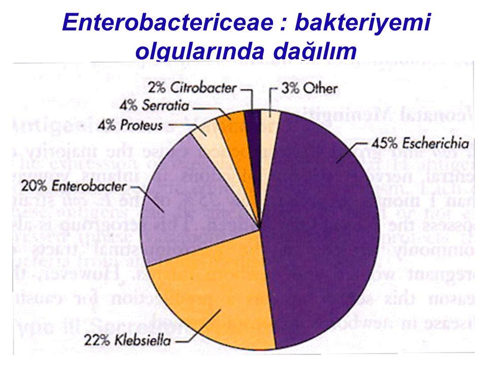 Enterobactericeae : bakteriyemi olgularında dağılım