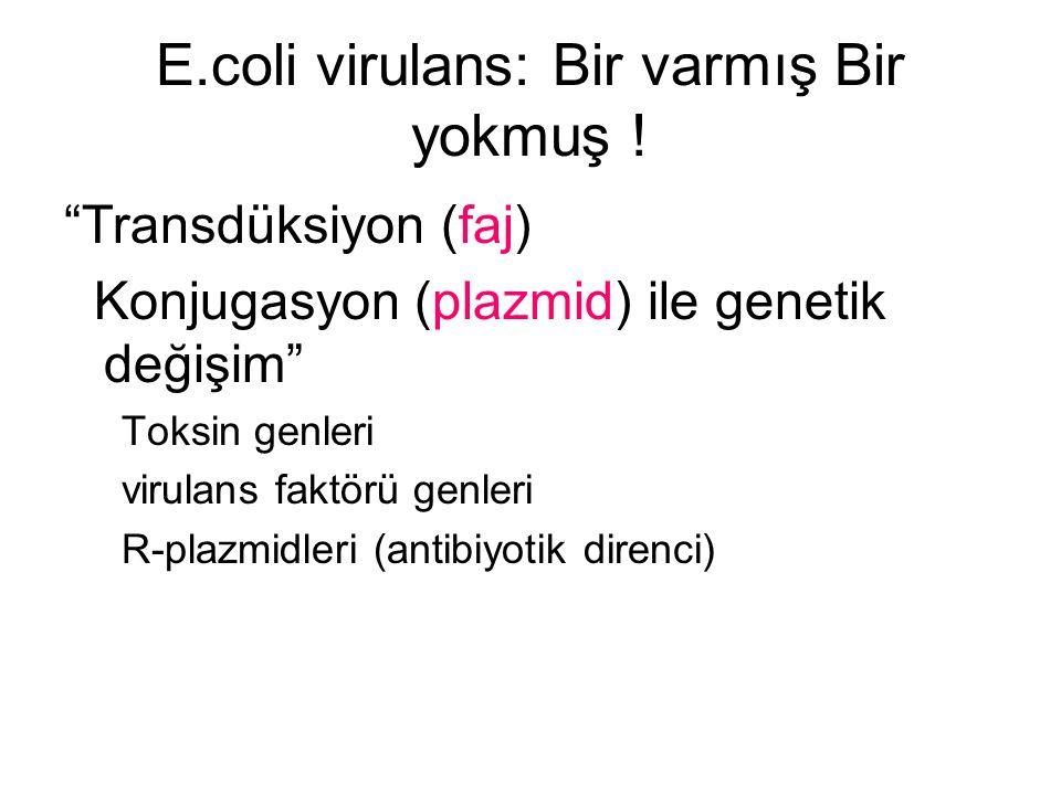 """E.coli virulans: Bir varmış Bir yokmuş ! """"Transdüksiyon (faj) Konjugasyon (plazmid) ile genetik değişim"""" Toksin genleri virulans faktörü genleri R-pla"""