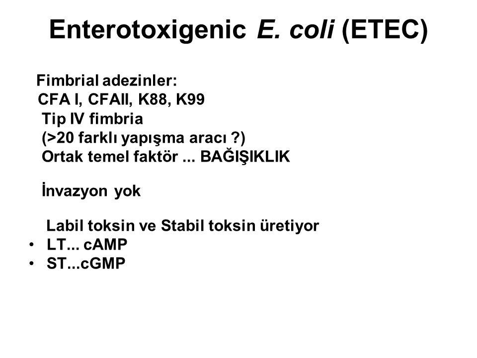 Enterotoxigenic E. coli (ETEC) Fimbrial adezinler: CFA I, CFAII, K88, K99 Tip IV fimbria (>20 farklı yapışma aracı ?) Ortak temel faktör... BAĞIŞIKLIK