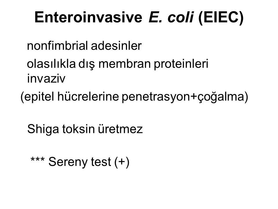 Enteroinvasive E. coli (EIEC) nonfimbrial adesinler olasılıkla dış membran proteinleri invaziv (epitel hücrelerine penetrasyon+çoğalma) Shiga toksin ü