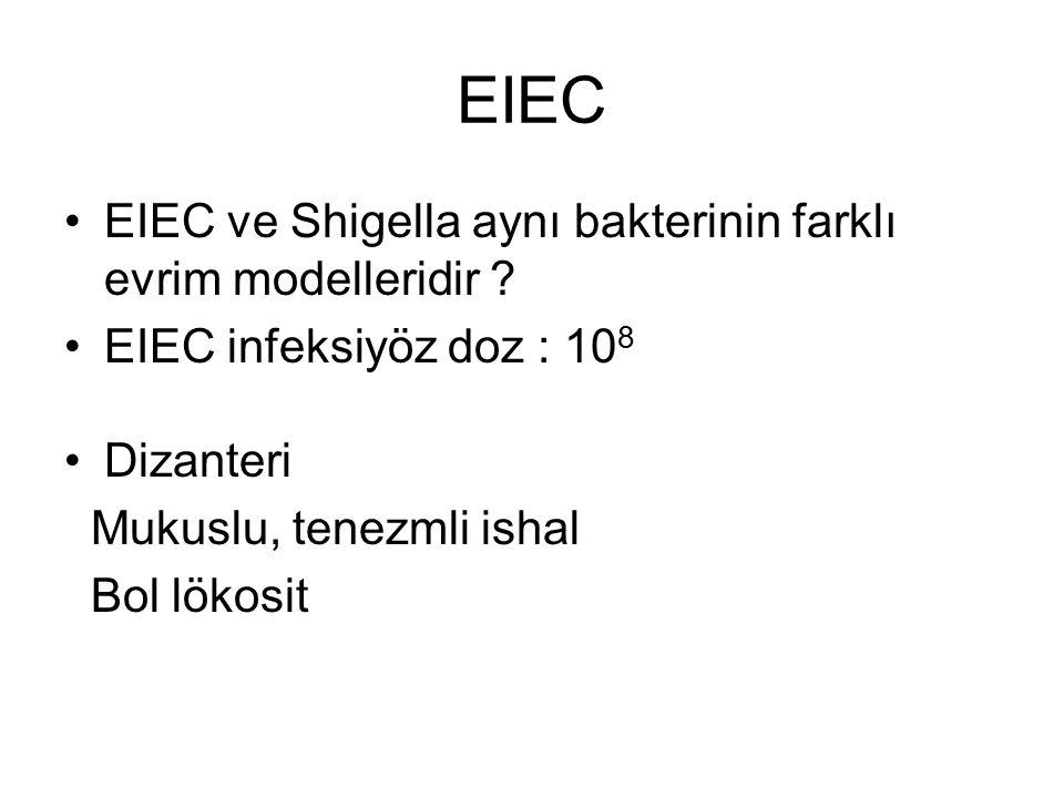 EIEC EIEC ve Shigella aynı bakterinin farklı evrim modelleridir ? EIEC infeksiyöz doz : 10 8 Dizanteri Mukuslu, tenezmli ishal Bol lökosit