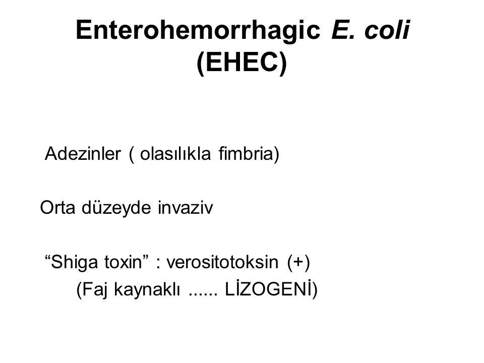 "Enterohemorrhagic E. coli (EHEC) Adezinler ( olasılıkla fimbria) Orta düzeyde invaziv ""Shiga toxin"" : verositotoksin (+) (Faj kaynaklı...... LİZOGENİ)"