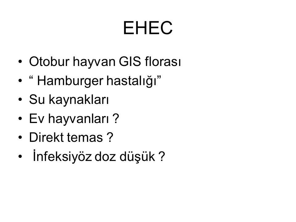"""EHEC Otobur hayvan GIS florası """" Hamburger hastalığı"""" Su kaynakları Ev hayvanları ? Direkt temas ? İnfeksiyöz doz düşük ?"""