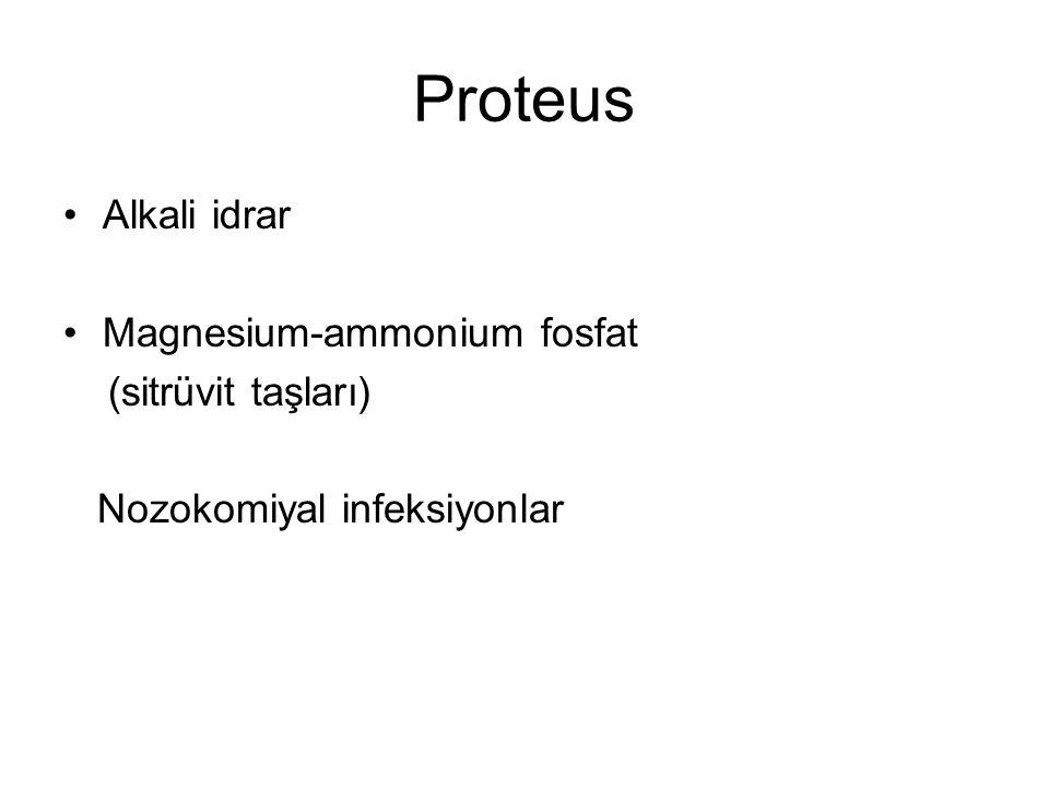 Proteus Alkali idrar Magnesium-ammonium fosfat (sitrüvit taşları) Nozokomiyal infeksiyonlar