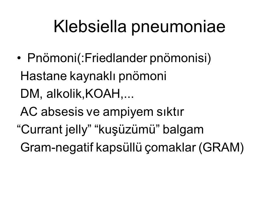 """Pnömoni(:Friedlander pnömonisi) Hastane kaynaklı pnömoni DM, alkolik,KOAH,... AC absesis ve ampiyem sıktır """"Currant jelly"""" """"kuşüzümü"""" balgam Gram-nega"""