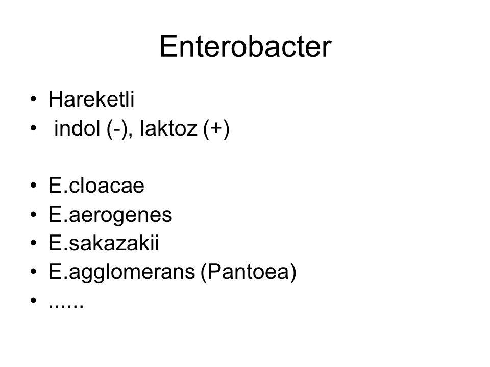 Enterobacter Hareketli indol (-), laktoz (+) E.cloacae E.aerogenes E.sakazakii E.agglomerans (Pantoea)......