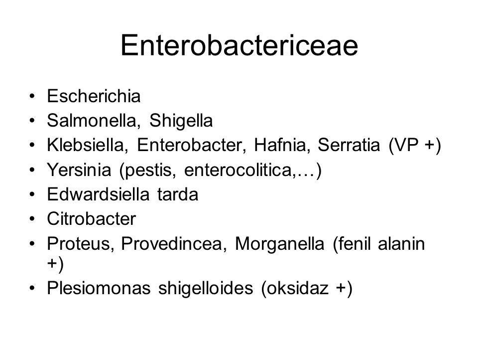 Enterobactericeae Escherichia Salmonella, Shigella Klebsiella, Enterobacter, Hafnia, Serratia (VP +) Yersinia (pestis, enterocolitica,…) Edwardsiella