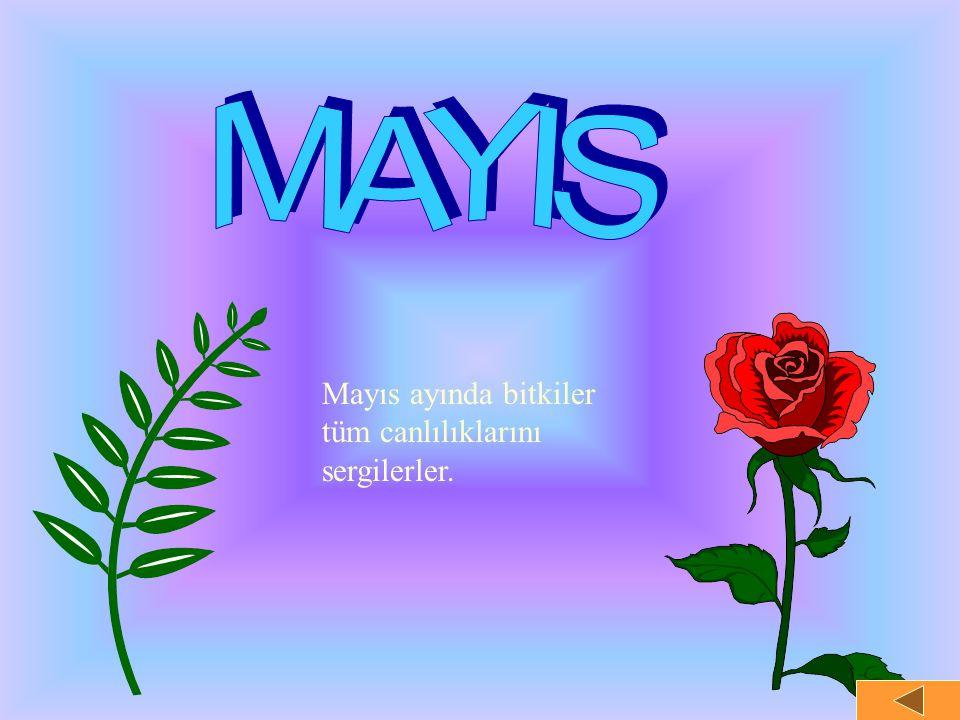Mayıs ayında bitkiler tüm canlılıklarını sergilerler.
