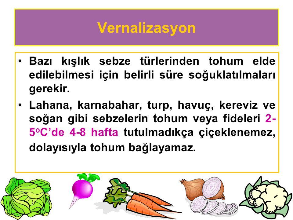 Vernalizasyon Bazı kışlık sebze türlerinden tohum elde edilebilmesi için belirli süre soğuklatılmaları gerekir. Lahana, karnabahar, turp, havuç, kerev