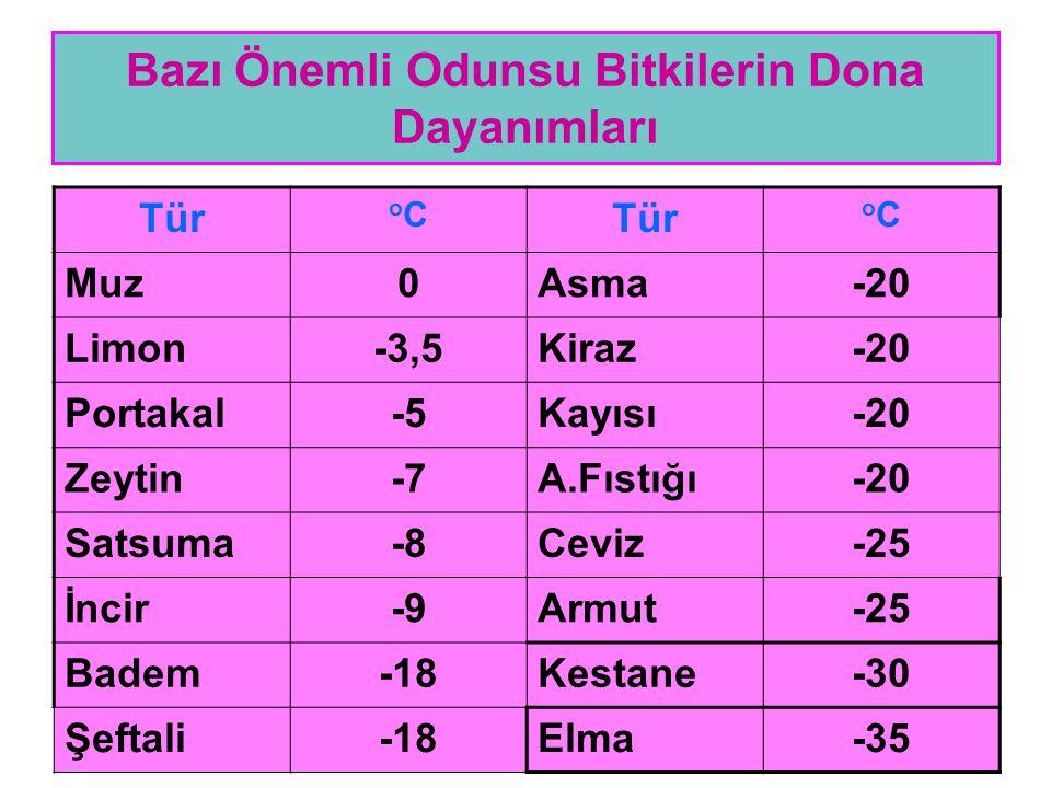 Bazı Önemli Odunsu Bitkilerin Dona Dayanımları Tür oCoC oCoC Muz0Asma-20 Limon-3,5Kiraz-20 Portakal-5Kayısı-20 Zeytin-7A.Fıstığı-20 Satsuma-8Ceviz-25