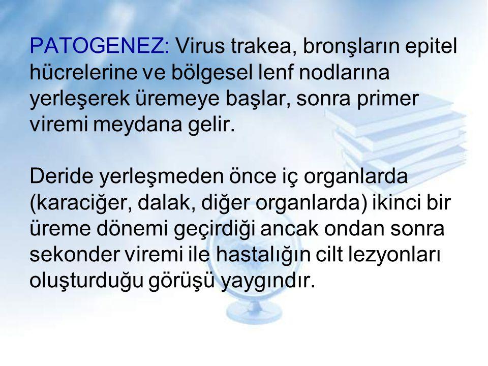 PATOGENEZ: Virus trakea, bronşların epitel hücrelerine ve bölgesel lenf nodlarına yerleşerek üremeye başlar, sonra primer viremi meydana gelir. Deride