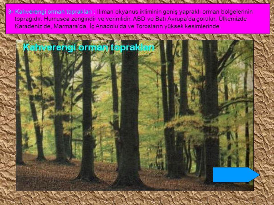 3- Kahverengi orman toprakları : Ilıman okyanus ikliminin geniş yapraklı orman bölgelerinin toprağıdır. Humusça zengindir ve verimlidir. ABD ve Batı A