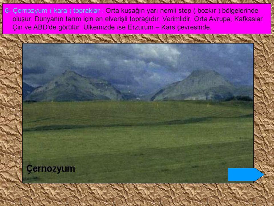 6- Çernozyum ( kara ) topraklar : Orta kuşağın yarı nemli step ( bozkır ) bölgelerinde oluşur. Dünyanın tarım için en elverişli toprağıdır. Verimlidir