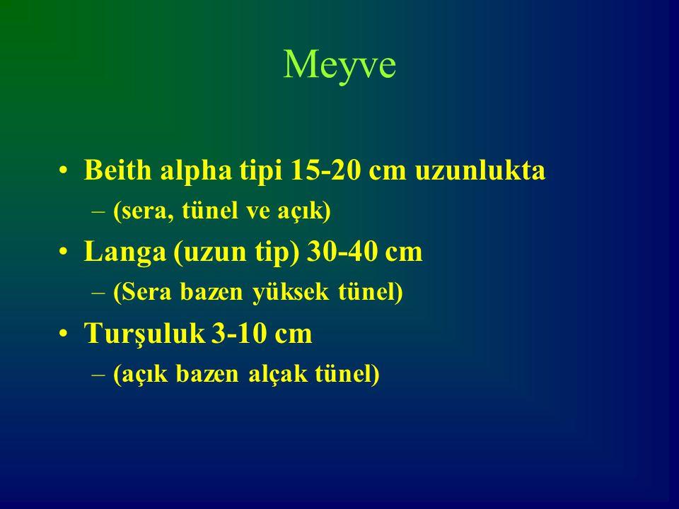 Meyve Beith alpha tipi 15-20 cm uzunlukta –(sera, tünel ve açık) Langa (uzun tip) 30-40 cm –(Sera bazen yüksek tünel) Turşuluk 3-10 cm –(açık bazen al