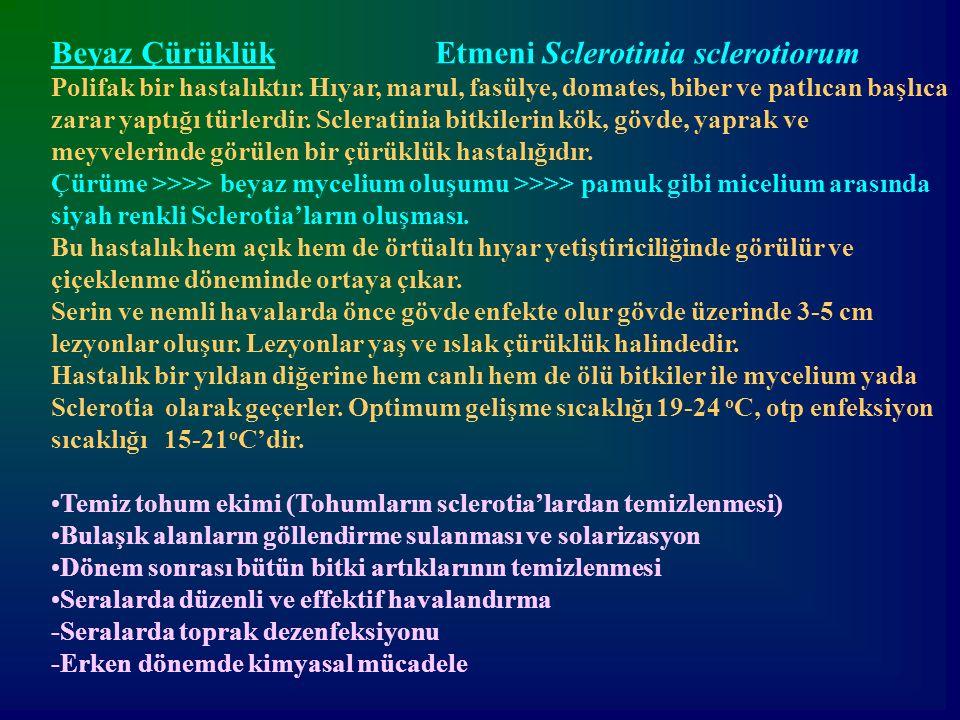 Beyaz Çürüklük Etmeni Sclerotinia sclerotiorum Polifak bir hastalıktır. Hıyar, marul, fasülye, domates, biber ve patlıcan başlıca zarar yaptığı türler
