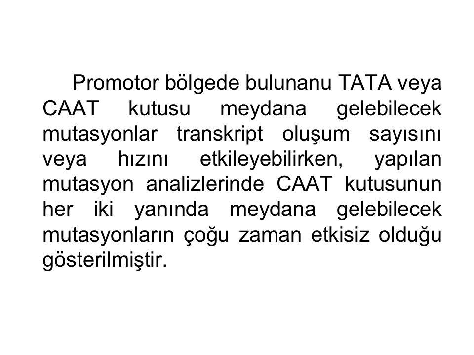 Promotor bölgede bulunanu TATA veya CAAT kutusu meydana gelebilecek mutasyonlar transkript oluşum sayısını veya hızını etkileyebilirken, yapılan mutas