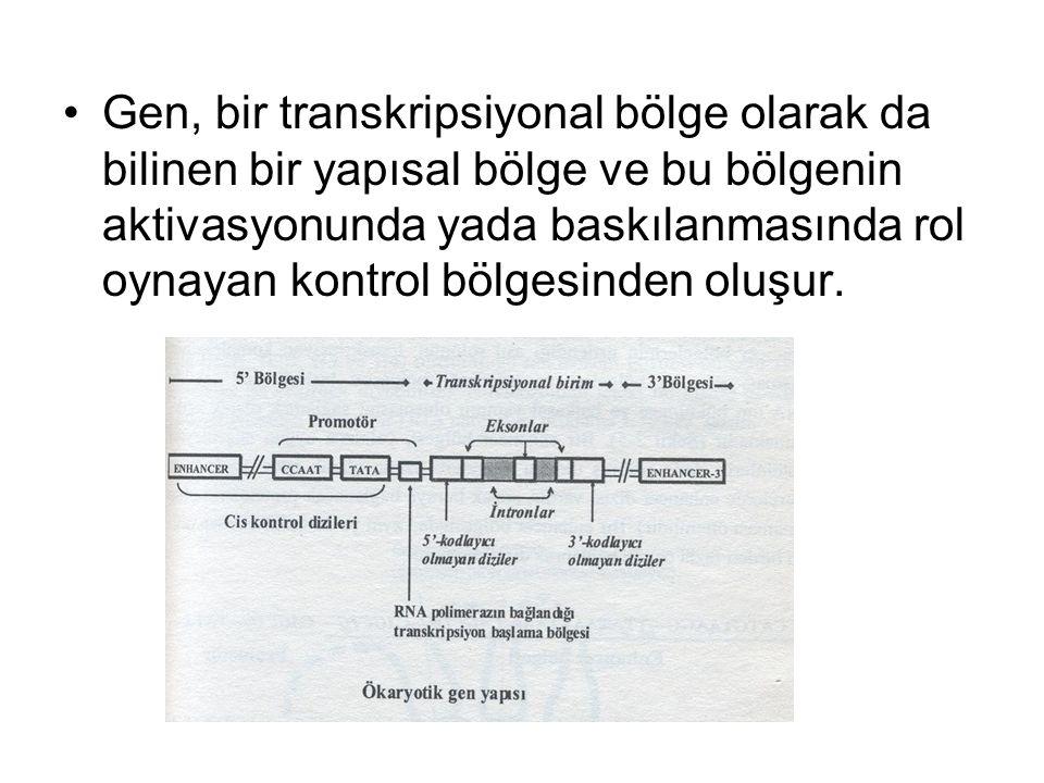 Gen, bir transkripsiyonal bölge olarak da bilinen bir yapısal bölge ve bu bölgenin aktivasyonunda yada baskılanmasında rol oynayan kontrol bölgesinden